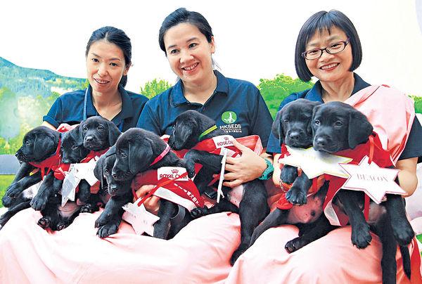 港產導盲犬BB 衝出亞洲