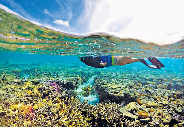 大堡礁浮潛 一個月奪四命