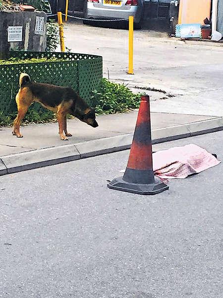 貨車撞死狗 司機冷笑而去