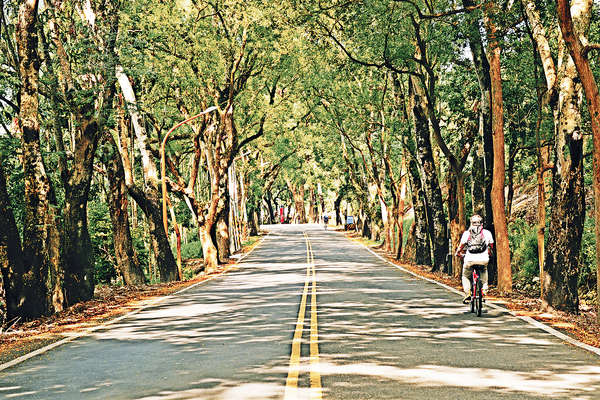 台中單車遊 綠色隧道覽小鎮