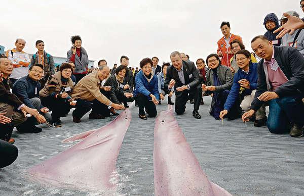 全港最大立體畫 海豚起舞宣共融