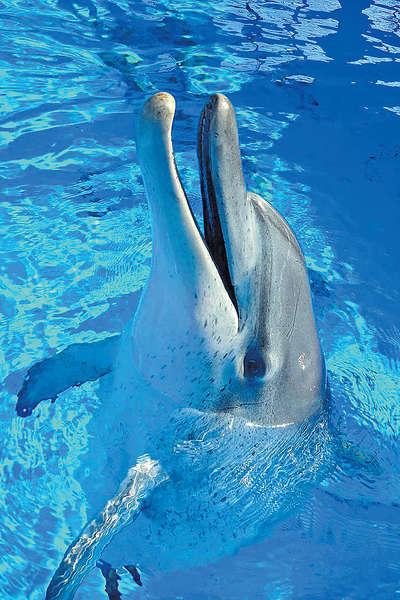 海洋公園44歲海豚病逝