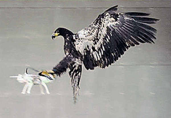 荷警獵鷹「生擒」無人機