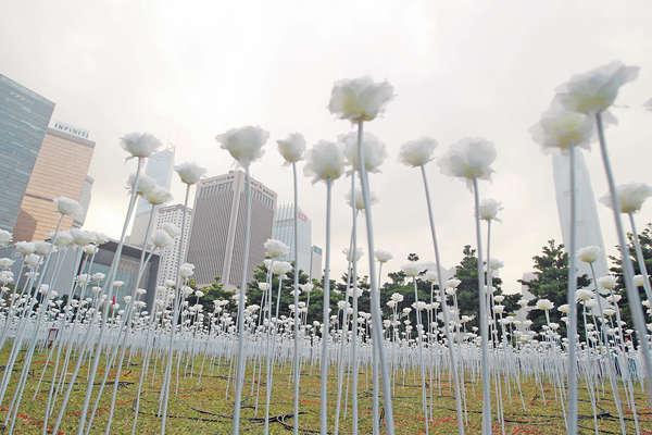 韓國浪漫花燈海 情人節中環盛開
