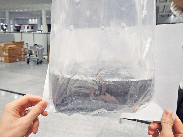 海關檢48公斤瀕危歐洲鰻鱺