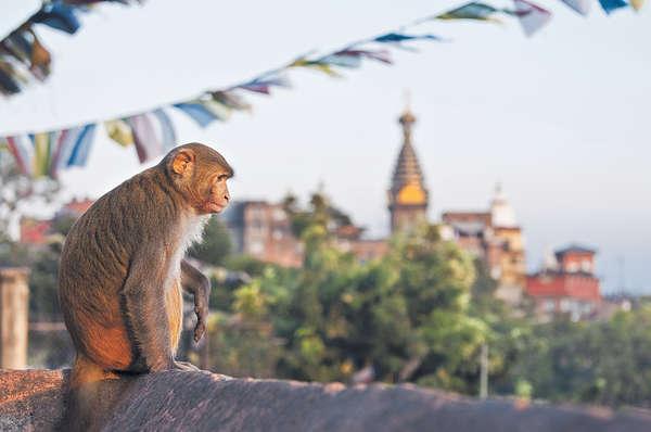 3大應節景點 世界猴子零距離
