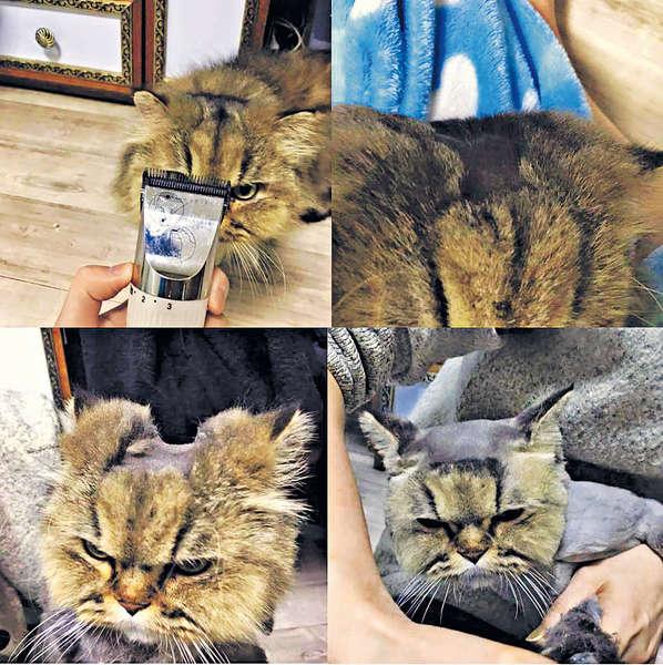 貓貓剃方塊頭