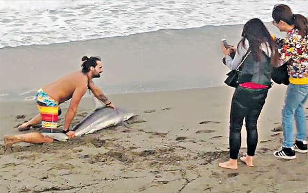 無品泳客再現 強拖鯊魚合照