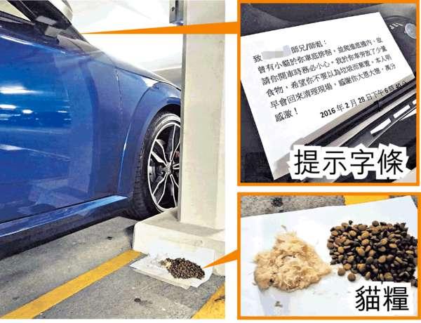 暖男貼字條 提示車主車底有貓