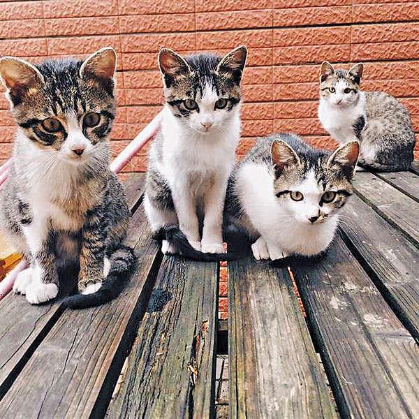 萌貓駐警局 台「東山四寶」超得意