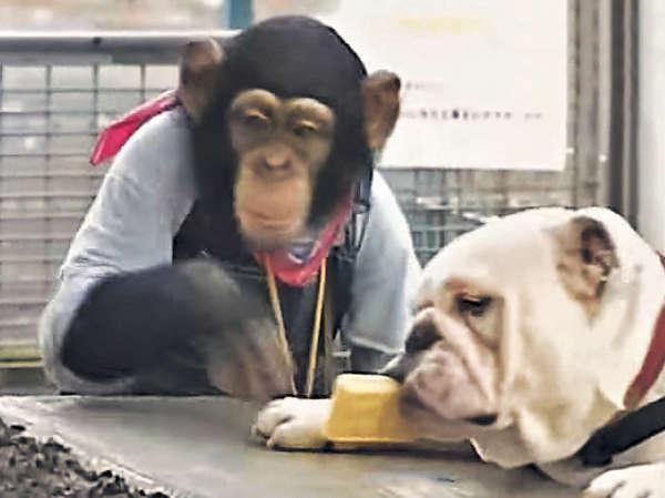動物園搞圖片展悼念阿占