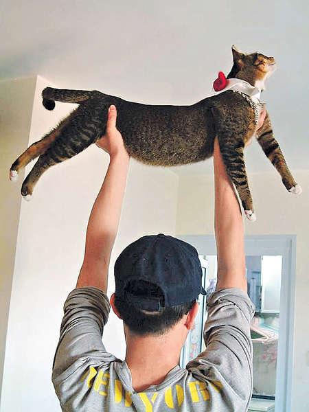 貓貓當啞鈴 主人健身有法
