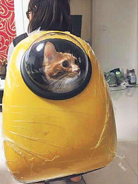 「喵星」太空船 網民勁讚有趣