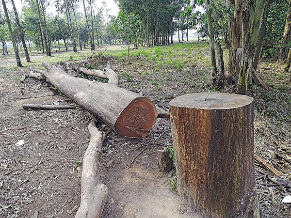 南生圍20樹疑被斬 遊人當凳坐