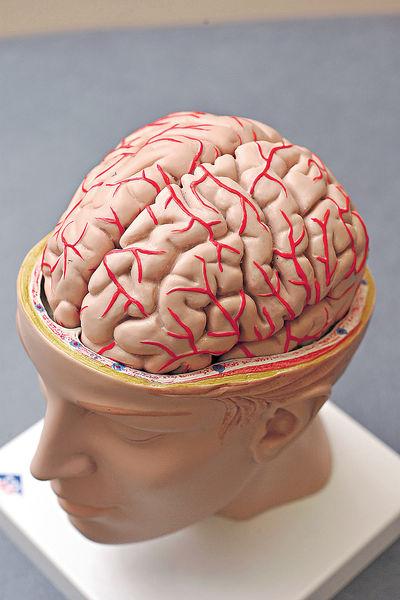 睡眠電激腦部 或可治腦退化