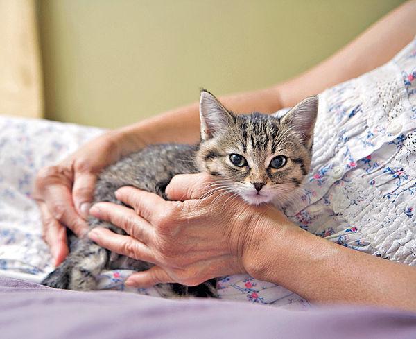 美國女子與貓同睡 陰道積聚毛球