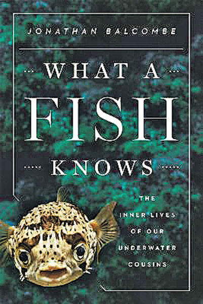 《What a Fish Knows》