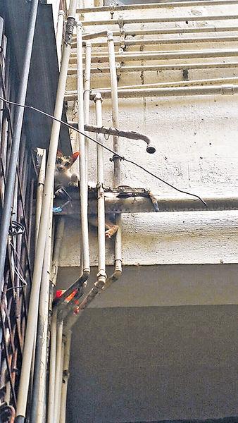 狂徒裝捕獸器 貓咪夾腳困大廈外牆