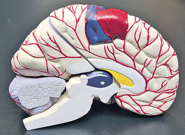 控制大腦釋放α波 增記憶力