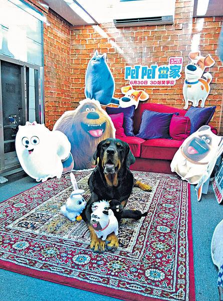 《Pet Pet當家》下周四上畫 專車游走鬧市做宣傳