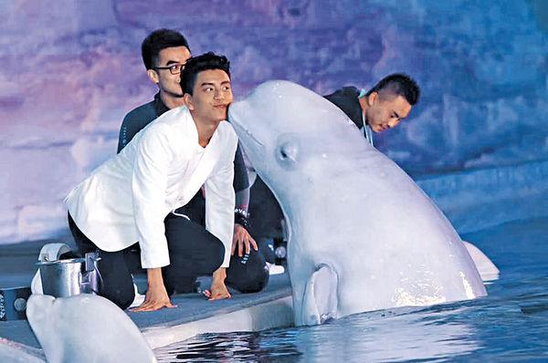王大陸被白鯨拒吻