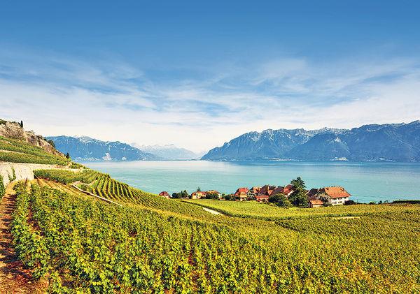 瑞士日內瓦湖畔 賞世遺壯麗梯田
