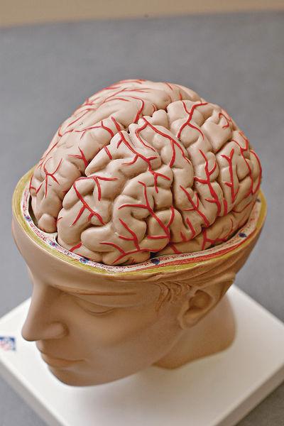 中年患高血壓 易腦退化