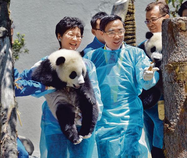 四川大熊貓基地 港人可免費參觀