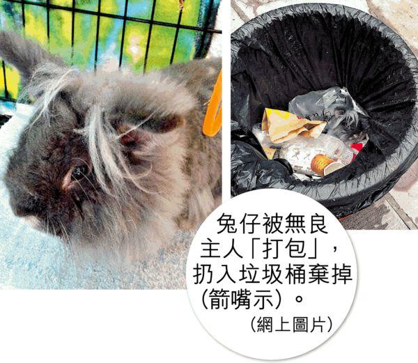 膠袋「打包」活兔丟棄 主人被批冷血