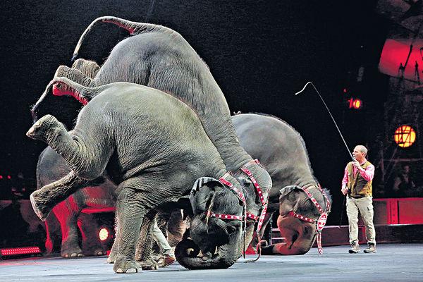 玲玲馬戲團 200年大象騷落幕