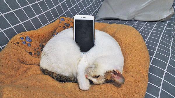 真貓「手機座」 網民:真皮製造