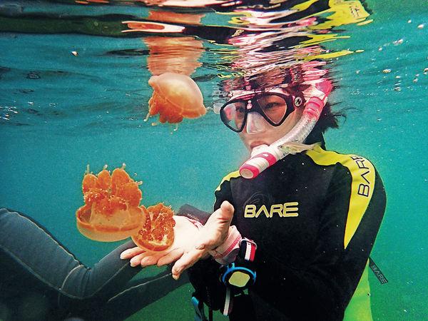 印尼達拉灣群島 無毒水母伴游