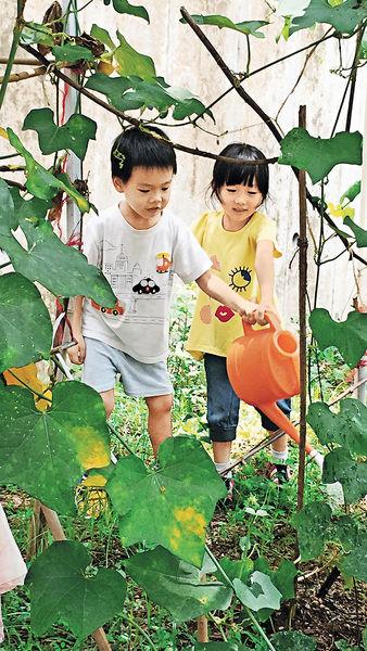 小農夫學種菜 認識蔬果戒偏食