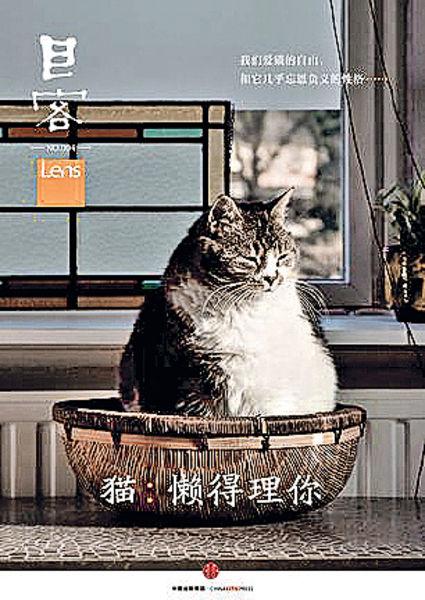 《目客004‧貓:懶得理你》