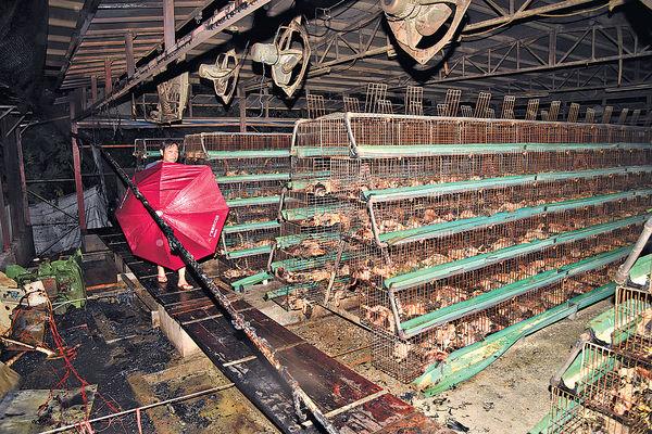 雞場失火 3000雞苗燒死