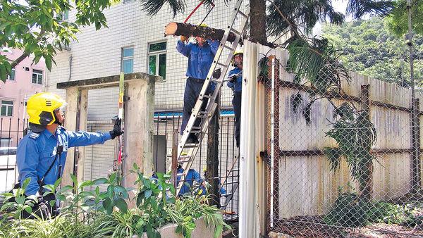 男子爬梯鋸樹失足 鐵枝插穿右膝