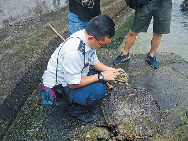 淡水龜養殖魚 遭倒落海送死