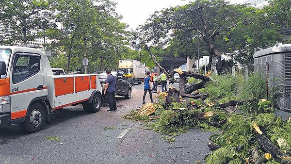 銅鑼灣塌樹 壓私家車