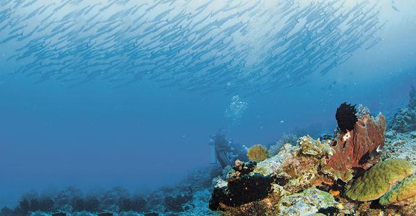 潛入印尼秘境 達拉灣群島