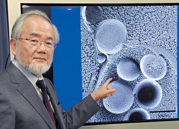研細胞自噬 日學者榮獲醫學諾獎