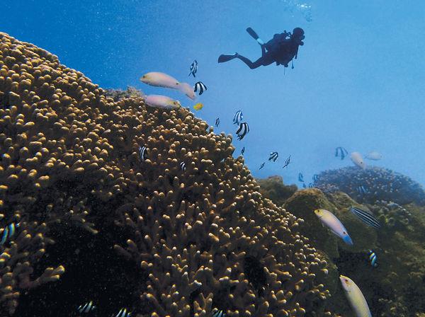 $5200沖繩跑10K 潛水初體驗