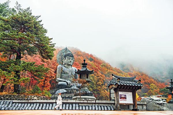 $5900 南韓雪嶽山賞紅葉