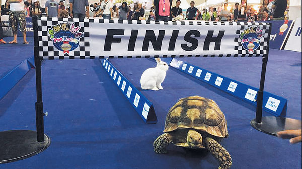 龜兔賽跑寓言成真
