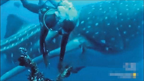 減少海洋廢物 愛護大自然