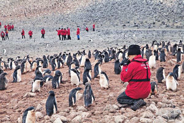 登陸南極 賞冰川.觀企鵝