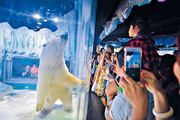 穗商場「最悲傷北極熊」 疑精神衰弱