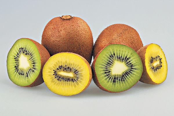 奇異果營養 黃綠有別