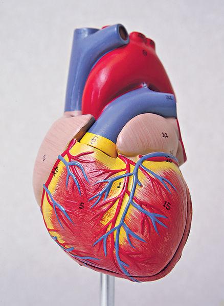 患難治性高血壓 心臟受損更嚴重