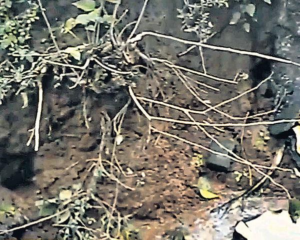下酸雨枯蔬菜 重慶化工廠毀村