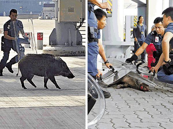 野豬機場「自遊行」特警盾牌陣圍捕